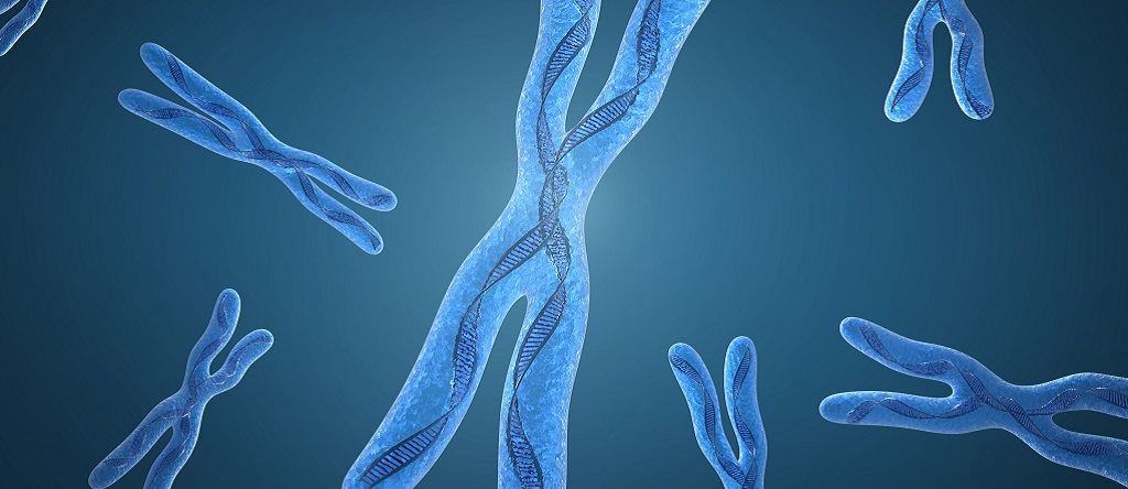 хромосомы